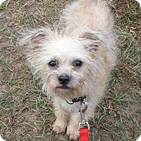 Adopt A Pet :: Manny - Jacksonville, FL