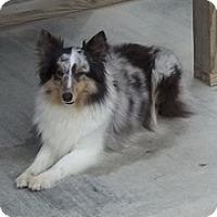 Adopt A Pet :: Jayda - Charlottesville, VA
