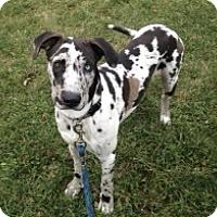 Adopt A Pet :: Jax - Stevens Point, WI