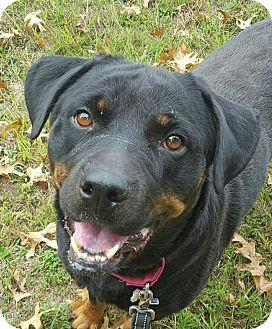 Rottweiler Mix Dog for adoption in Frederick, Pennsylvania - Jada
