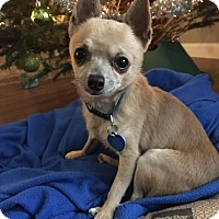 Adopt A Pet :: Oscar - AUSTIN, TX