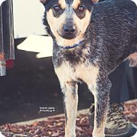 Adopt A Pet :: Cole - Gainesville, FL