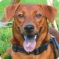 Adopt A Pet :: Zuma - San Ramon, CA