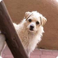 Adopt A Pet :: Pelos - Tijeras, NM