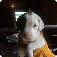 Adopt A Pet :: Funny Face - Hohenwald, TN
