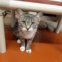 Adopt A Pet :: Lauren (Cocoa Center) - Cocoa, FL