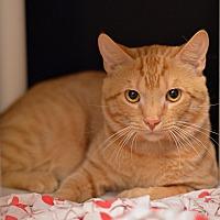 Adopt A Pet :: 10309827 - Brooksville, FL