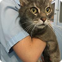 Adopt A Pet :: Elton - Port Coquitlam, BC