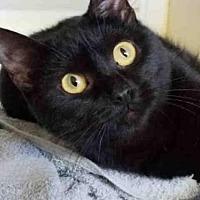 Adopt A Pet :: GENE - Rogers, AR