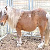 Adopt A Pet :: KIRBY - Union, MO