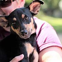 Adopt A Pet :: Lia - Morganville, NJ