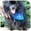 Photo 1 - Pomeranian Dog for adoption in Osseo, Minnesota - Tommy