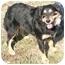 Photo 3 - Border Collie Mix Dog for adoption in Cincinnati, Ohio - Mindy