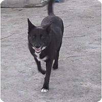 Adopt A Pet :: Amanda - Key Biscayne, FL