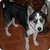 Adopt A Pet :: Timber - dewey, AZ