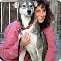 Adopt A Pet :: Pharoah - Belleville, MI