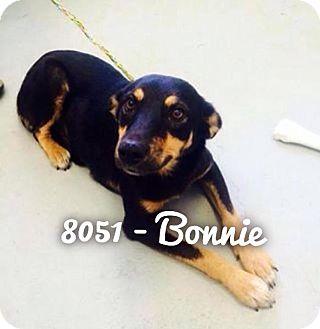 Shepherd (Unknown Type)/Labrador Retriever Mix Dog for adoption in Dillon, South Carolina - Bonnie