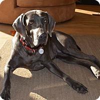 Adopt A Pet :: Lily Pupcakes - Grand Haven, MI