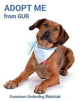 Redbone Coonhound Mix Dog for adoption in Gunnison, Colorado - Charlie Girl