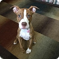 Adopt A Pet :: Penelope - Warsaw, IN