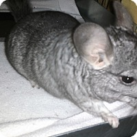 Adopt A Pet :: George - Avondale, LA