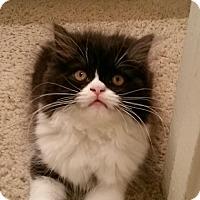 Adopt A Pet :: Paige - Beverly Hills, CA