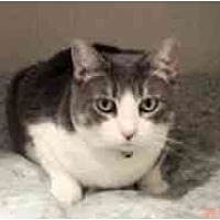 Adopt A Pet :: Marmee - Pasadena, CA
