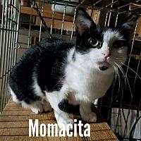 Adopt A Pet :: MOMACITA - Davison, MI
