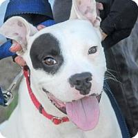 Adopt A Pet :: LOKI - Fernandina Beach, FL