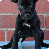 Adopt A Pet :: Greta - Waldorf, MD