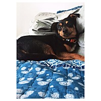Adopt A Pet :: Oscar - Orange, CA