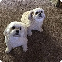 Adopt A Pet :: Charlie and Cassie - Parsippany, NJ