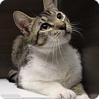 Adopt A Pet :: Binx - Wayne, NJ