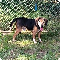 Adopt A Pet :: Luigi - Dumfries, VA