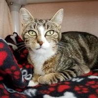 Adopt A Pet :: Portia - Marshfield, WI