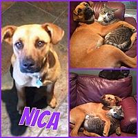 Adopt A Pet :: Nica - Edmonton, AB