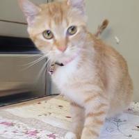 Adopt A Pet :: 653337 - Bakersfield, CA