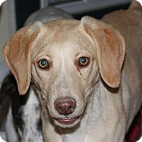 Adopt A Pet :: Farrah - PENDING, in Maine - kennebunkport, ME