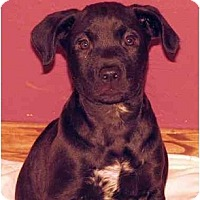 Adopt A Pet :: Pluto - Harrisburg, PA