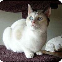 Adopt A Pet :: Anna Blue Eyes - cincinnati, OH