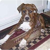 Adopt A Pet :: Diesel - Chandler, IN