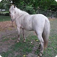 Adopt A Pet :: Ariel - Aumsville, OR