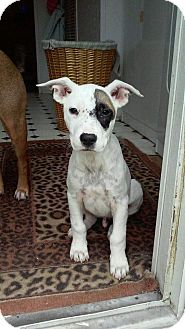 Terrier (Unknown Type, Medium) Mix Puppy for adoption in Mantua, New Jersey - Zero