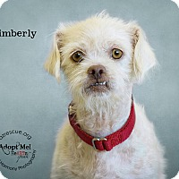 Adopt A Pet :: Kimberly - Phoenix, AZ