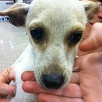 Adopt A Pet :: Leo - Fresno, CA
