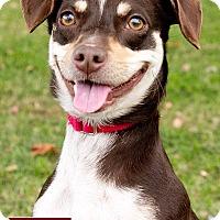 Adopt A Pet :: Ruby - Marina del Rey, CA
