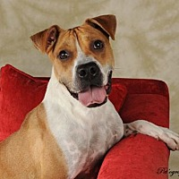 Adopt A Pet :: Loma - Las Vegas, NV