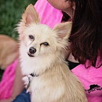 Adopt A Pet :: MICKEY - Rancho Cucamonga, CA