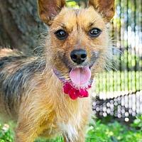 Adopt A Pet :: Esther - Brooklyn Center, MN