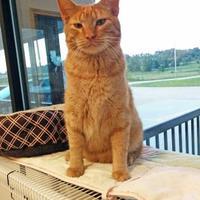 Adopt A Pet :: Ernie - Monticello, IA